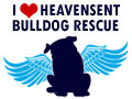 HeavenSent Bulldog Rescue of NJ.