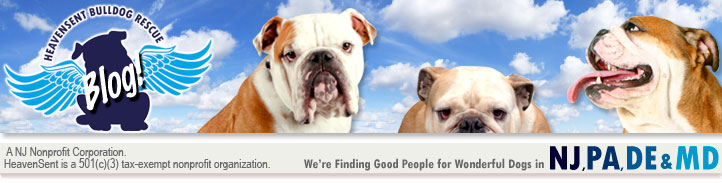 HeavenSent Bulldog Rescue Blog
